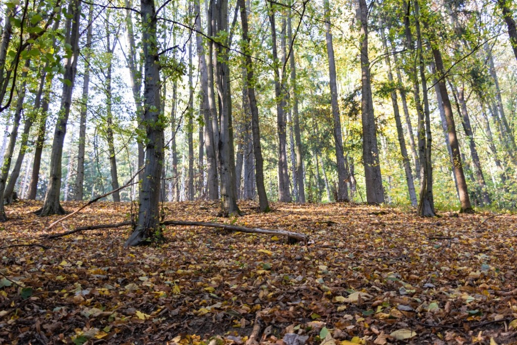 A picture containing tree, outdoor, forest, wood  Description automatically generated